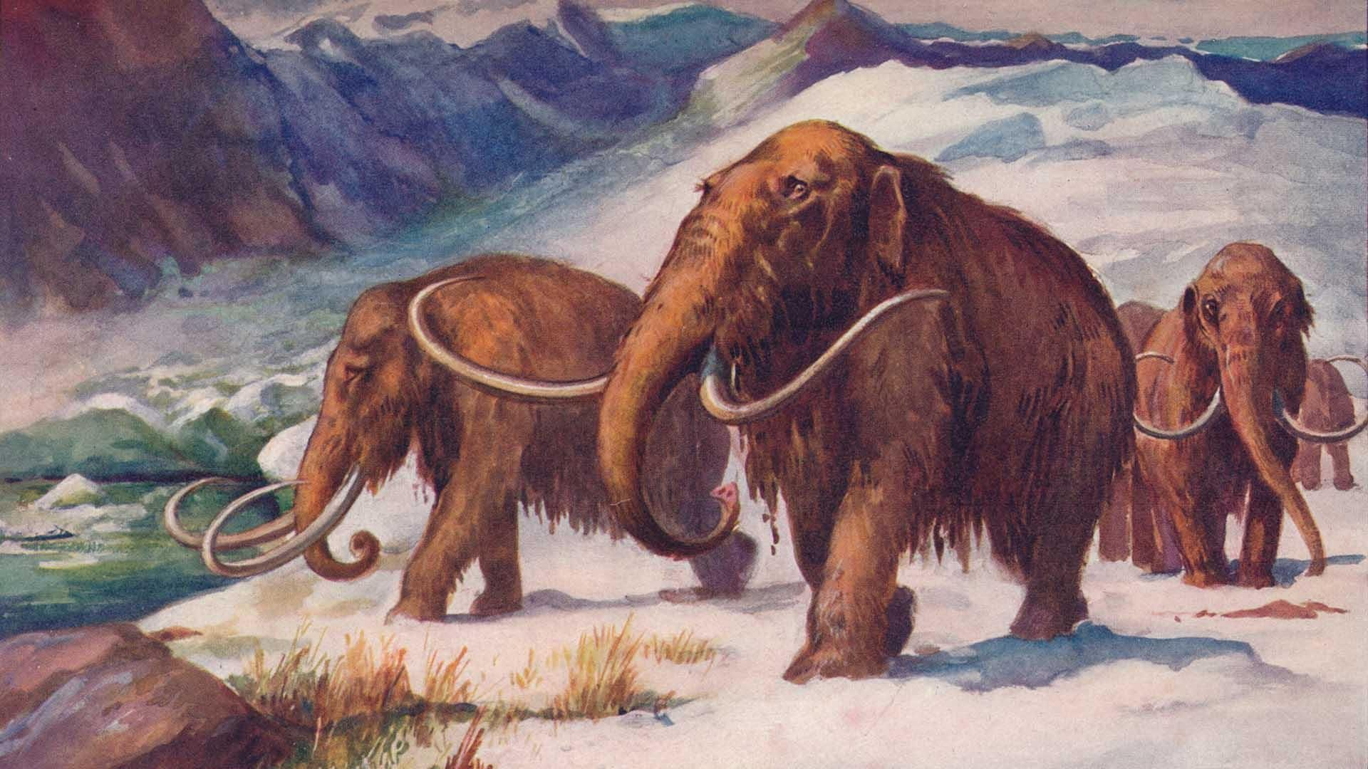 Cloning Woolly Mammoths And Global Warming Whats The