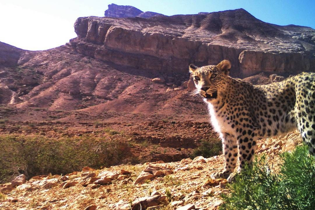 """""""Persian Leopard"""", Bafq Protected Area one of the most"""