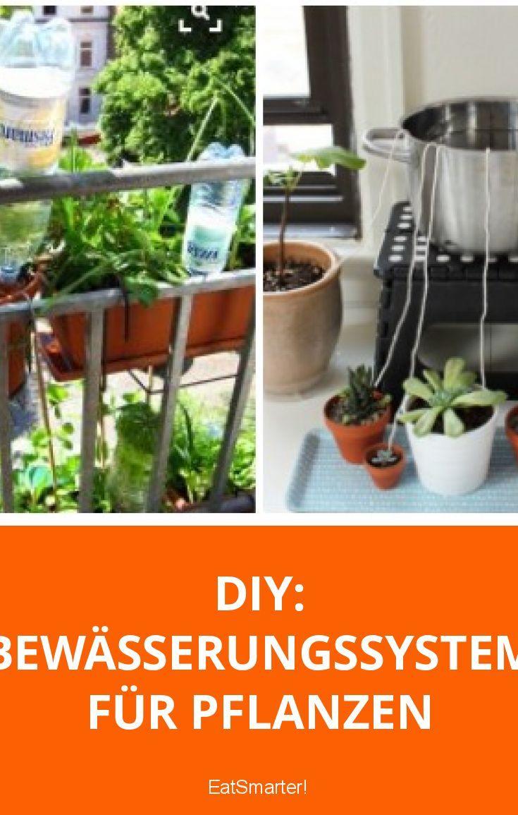 blumen und pflanzen automatisch bew ssern pinterest bew sserungssysteme pflanze und pflanzen. Black Bedroom Furniture Sets. Home Design Ideas
