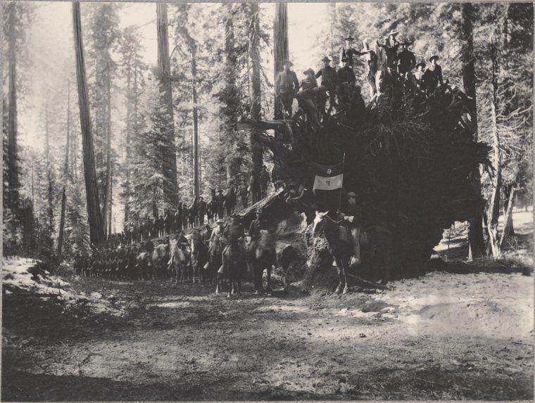 "6th Car, Troop ""F"" on Fallen Monarch, Mariposa Grove"