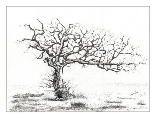 Les 25 meilleures id es de la cat gorie dessin encre de chine sur pinterest dessins de toile - Dessin arbre chinois ...