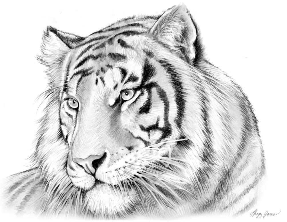 Тигр картинки нарисовать