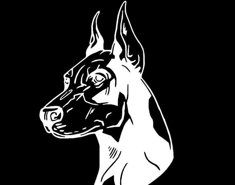 2x doberman dog vinyl decal sticker 6 white no background