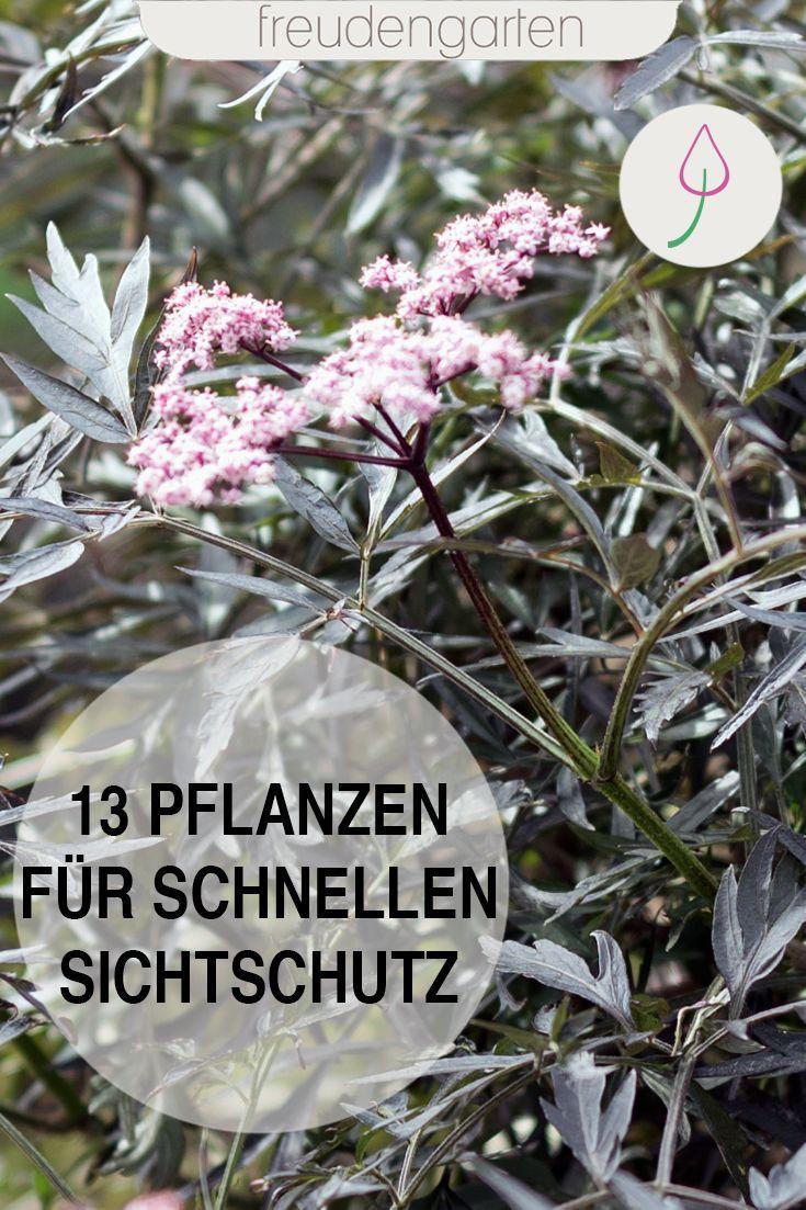 Sichtschutz mit schnell wachsenden Pflanzen