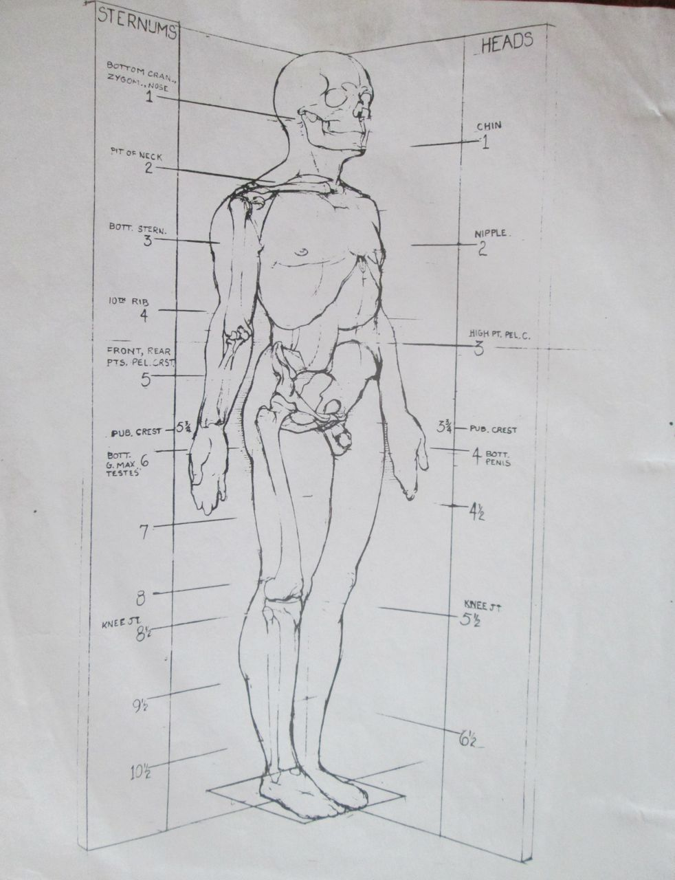 Ecorche notes from R. Melick. | Figure Construction | Pinterest ...