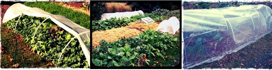 Plant Protection for Fall and Winter Vegetable Gardens