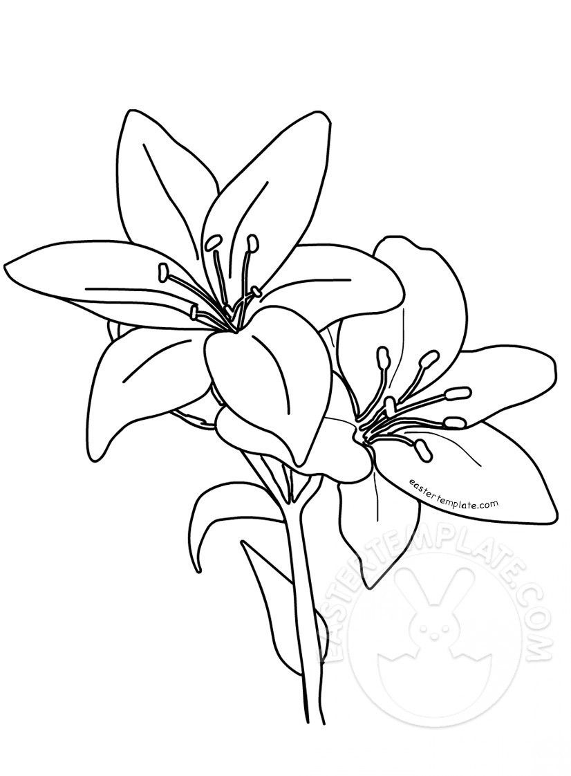Lily Flower Coloring Page Lilies Coloring Page Of Lily Flower Coloring Page Flower Coloring Pages Easter Lily Coloring Pages