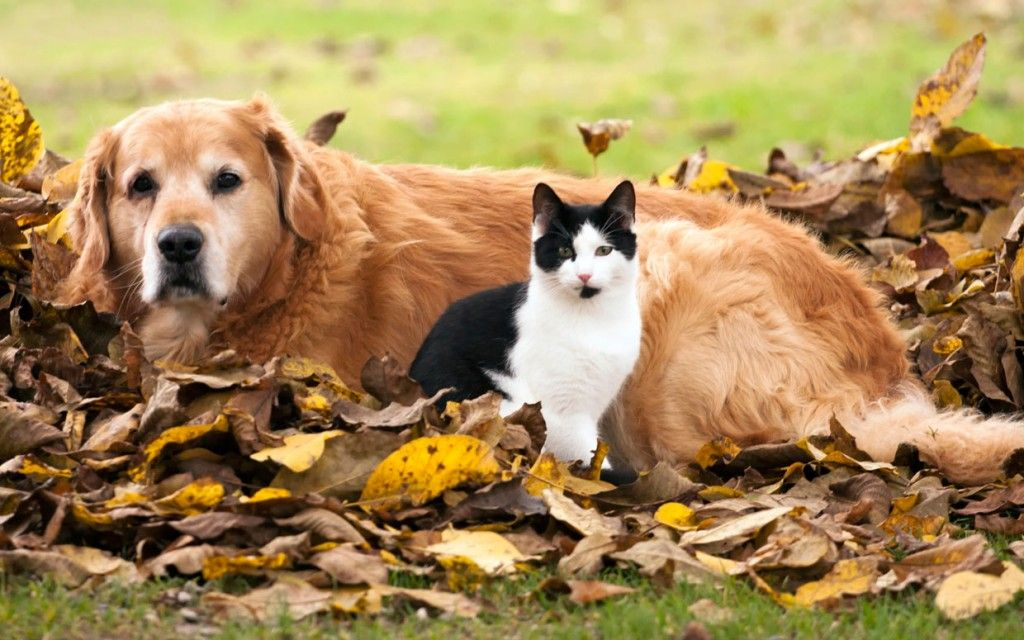 5 Halloween Safety Tips for Your Cats and Dogs Pets, Dog