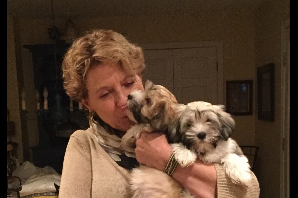 Marijke Tansey Havanese Fly Has Havanese Puppies For Sale In Guilford Ct On Akc Puppyfinder Havanese Puppies For Sale Puppies For Sale Havanese