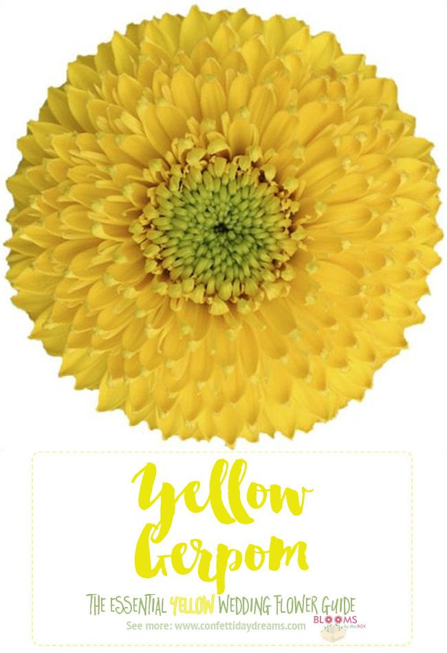 Names And Types Of Yellow Wedding Flowers With Pics Flower Tips Yellow Wedding Flowers Wedding Flower Guide Yellow Hydrangea Wedding