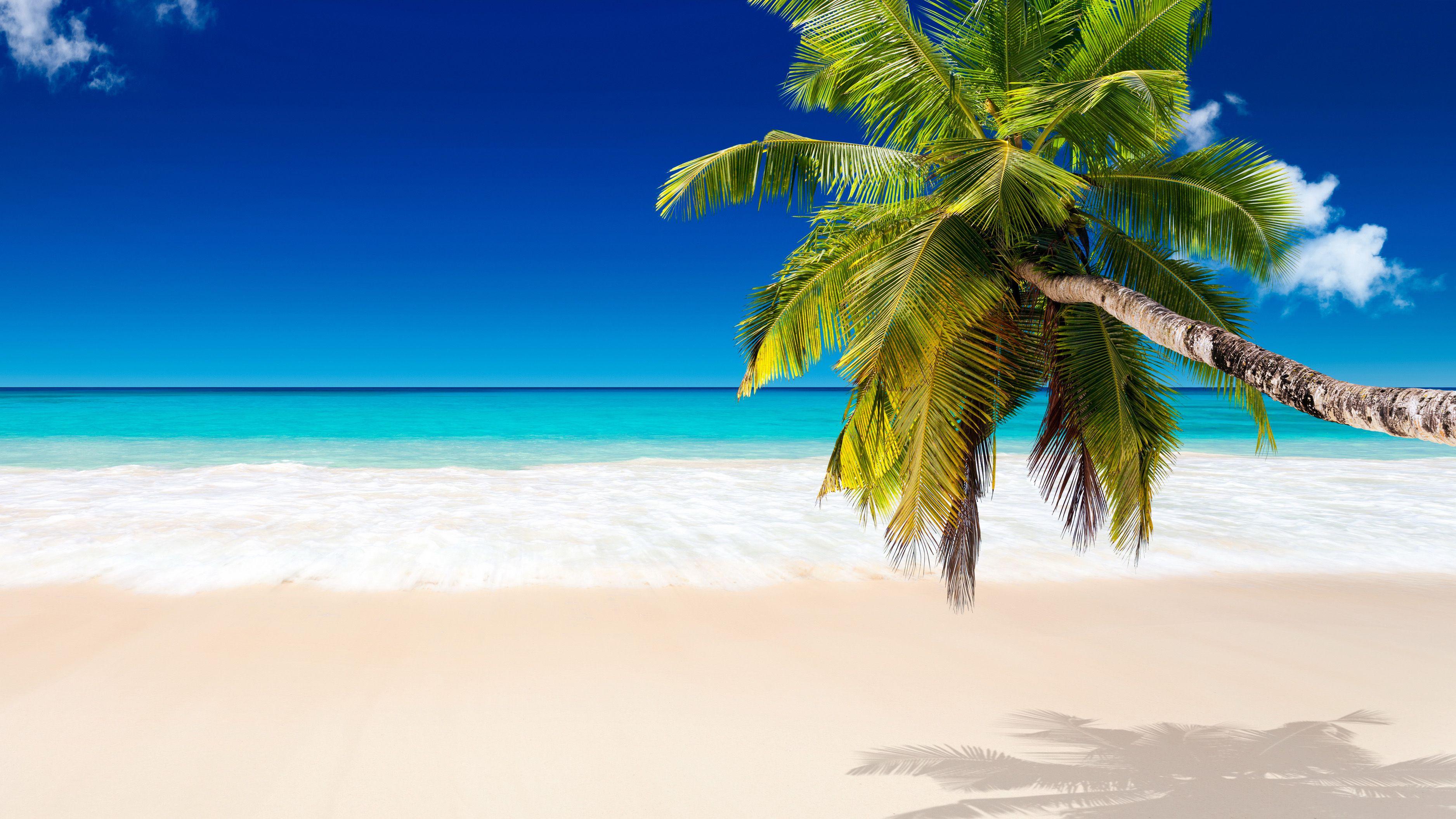 Tropical Beach Background Coconut Trees Hd Wallpapers Hd Pics Beach Background Beach Wallpaper Tree Hd Wallpaper