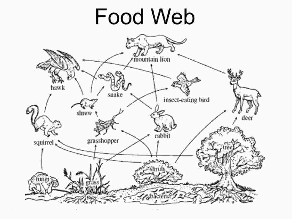 Simple Food Chain Coloring Pages