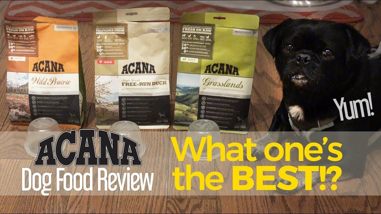 Do You Know Which Variety Of Acana Kilo Liked Best Dog Food