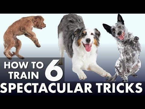 6 Impressive Dog Tricks That Are Easier Than You Think Youtube