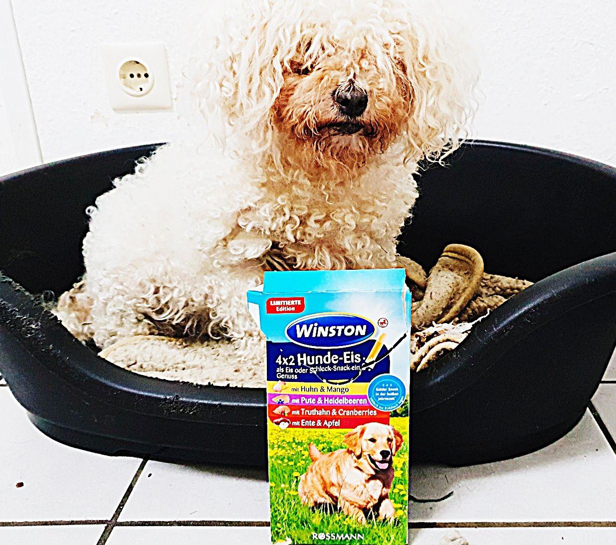 Winston 4x2 Hunde-Eis