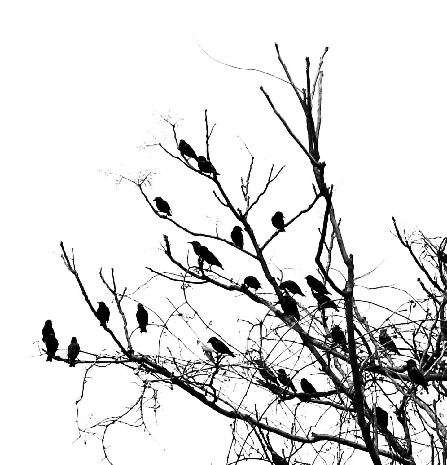 Black And White Bird Wallpapers Group 1920 1200 Adorable