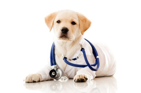 Training Tips To Make Vet Visits A Success Part 1