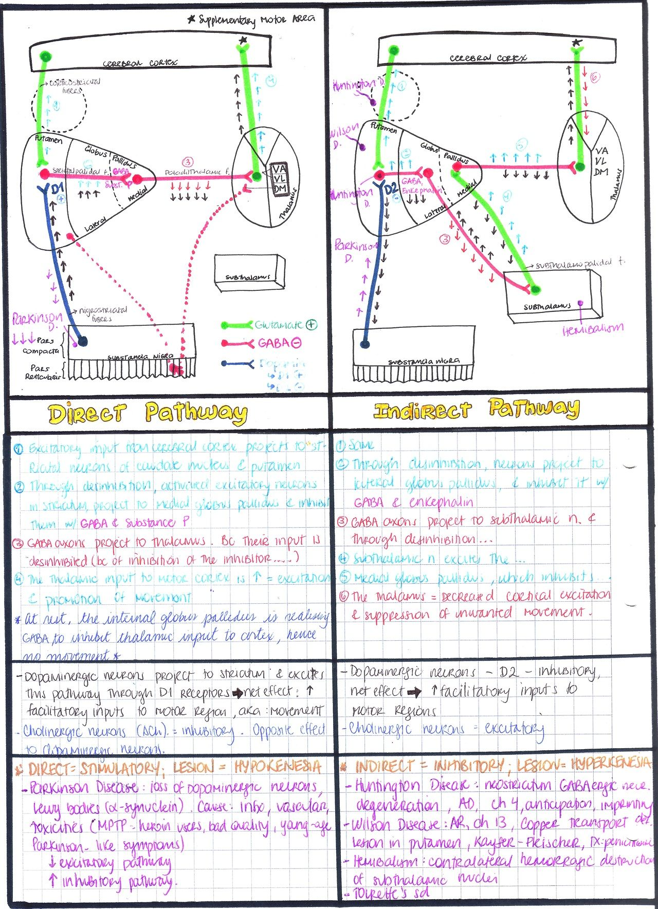 BASAL GANGLIA: DIRECT & INDIRECT PATHWAYS | #Medicine | Pinterest ...
