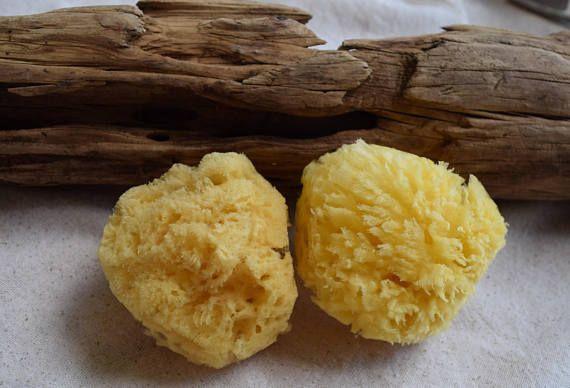 3 Natural Yellow Sea Sponges 2.5\