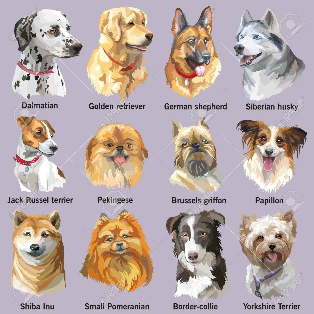 Set Of Colorful Vector Portraits Of Dog Breeds Siberian Husky Dog Breeds Dog Photos Dogs