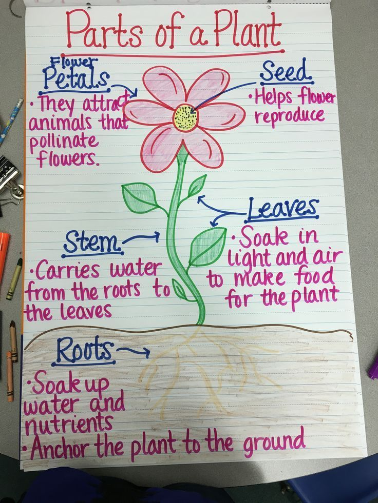 Parts of a Plant Anchor Chart | Teaching plants, Plants ...