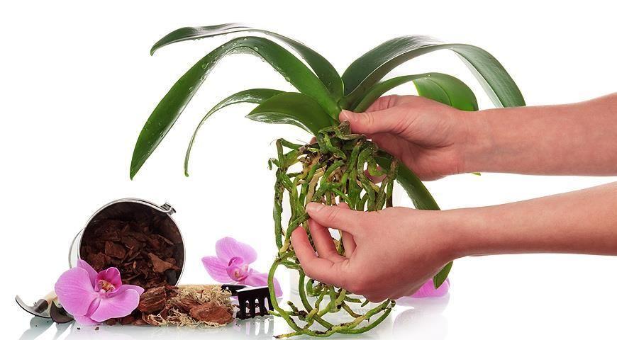 можно ли поливать цветы квасом