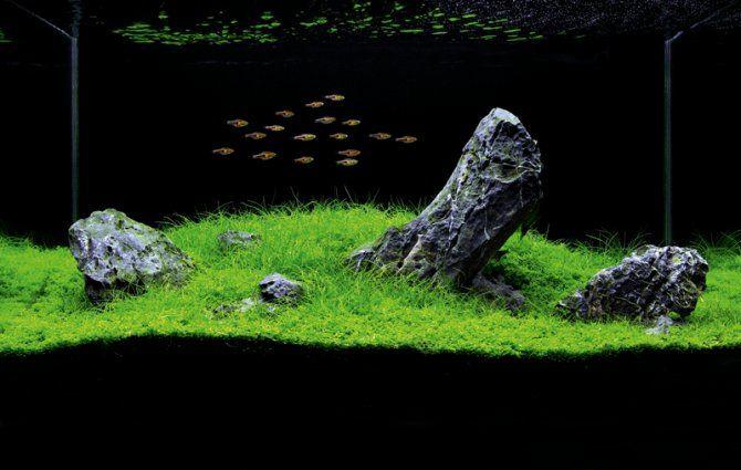 Iwagumi style aquascapes make the stones the aquarium 39 s for Fish tank stones