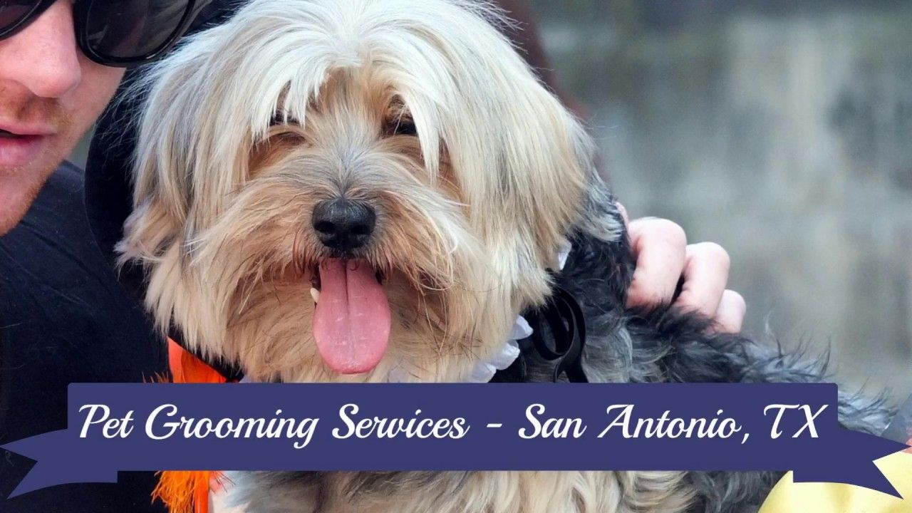 Pet Supplies Plus offers grooming services in San Antonio