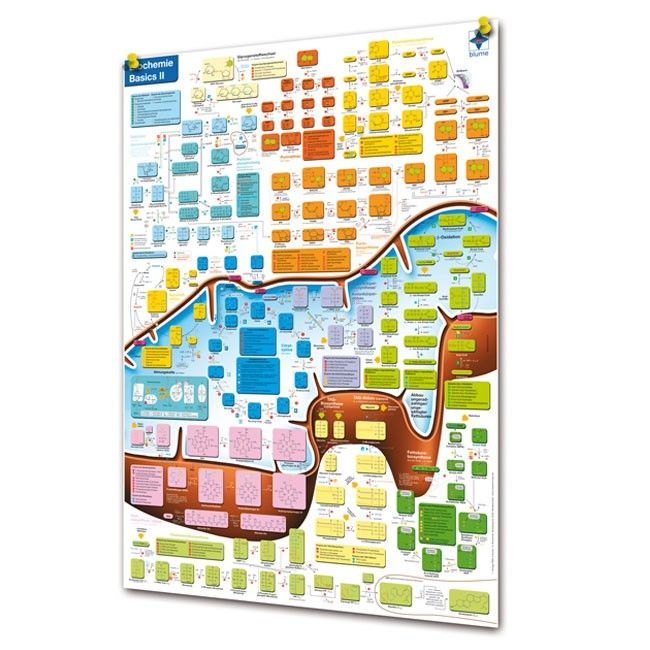 Das Biochemie Basics II Lernposter zeigt die komplexen Zusammenhänge ...