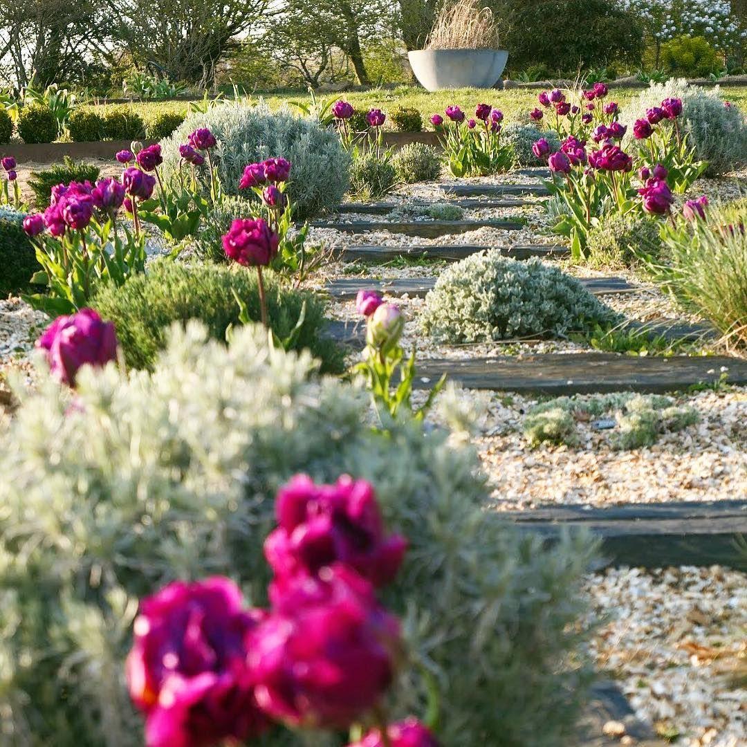 Le Jardin De Marie On Instagram Les Tulipes De L Allee