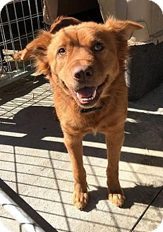 Westminster, MD - Golden Retriever/Spaniel (Unknown Type) Mix. Meet Yuna, a dog for adoption. http://www.adoptapet.com/pet/15028539-westminster-maryland-golden-retriever-mix