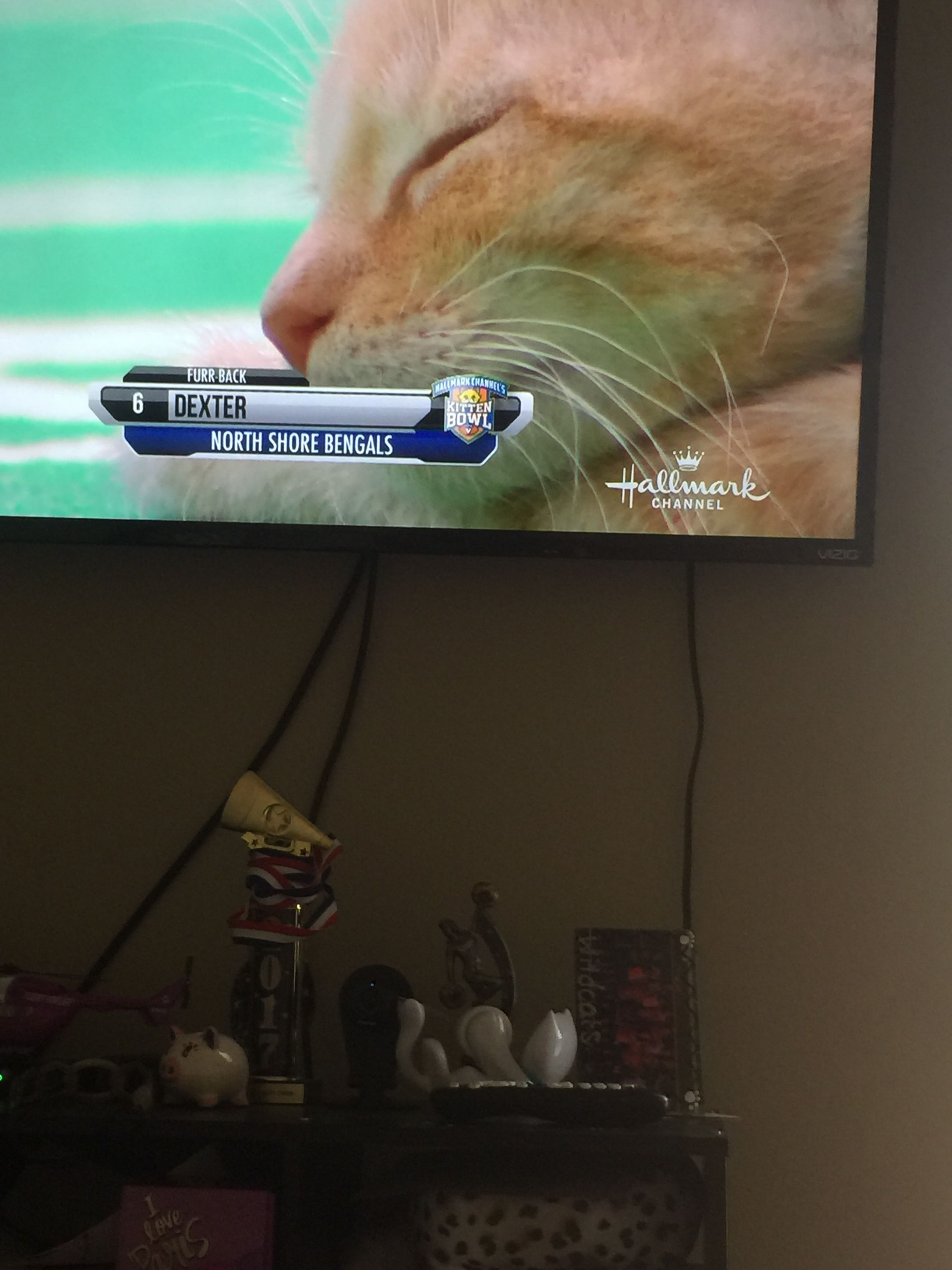 Pin By S T G Art On Kitten Bowl Hallmark Channel Kitten Bowls North Shore