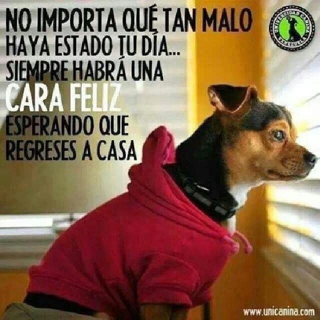 Mejor Amigo Perros Imagenes De Perros Y Perros Frases