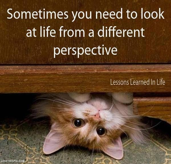Look At Life Life Quotes Quotes Cute Positive Quotes Animals Quote