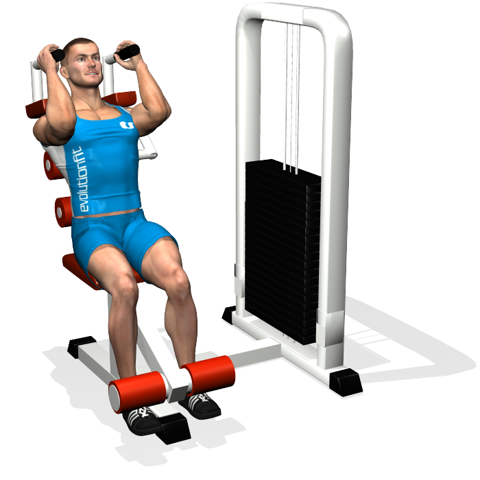 AB CRUNCH MACHINE INVOLVED MUSCLES DURING THE TRAINING ABDOMINALS