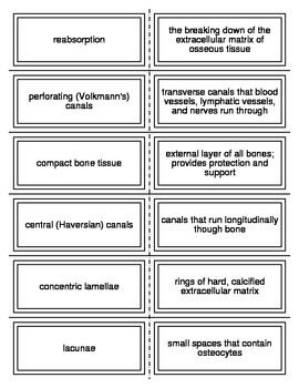 Introduction to the Skeletal System Vocabulary Flash Cards for ...