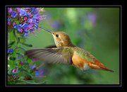 <3 hummingbirds