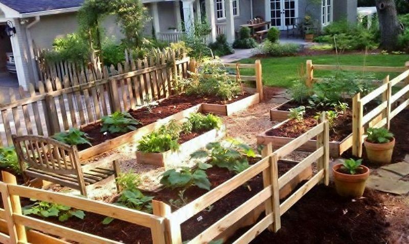 Starting Your Family Vegetable Garden | Raised garden beds ...
