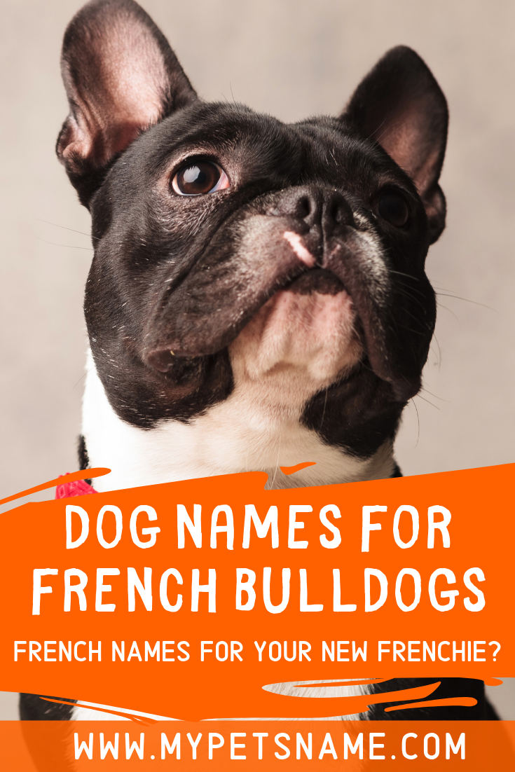 Dog Names For French Bulldog In 2020 Dog Names French Bulldog Names French Dog Names