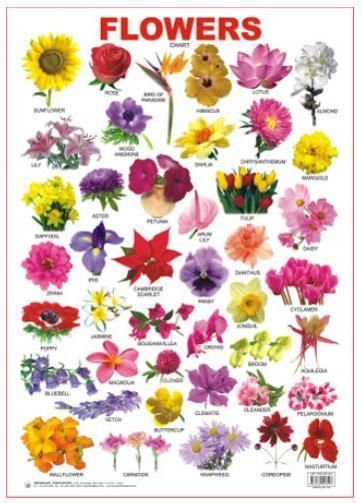 Flower bulb identification chartographi gardens for Kinds of flowers with name and picture
