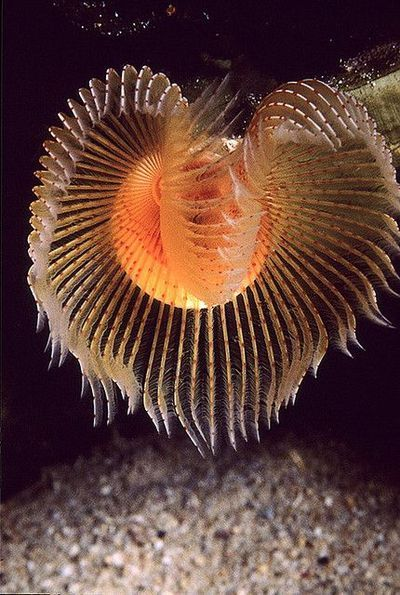 Feather Duster Worm Ocean Creatures Sea Plants Sea And Ocean