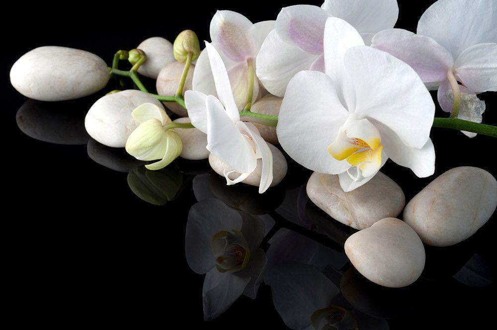 Украсила лес дикая орхидея, нечаянная Ле