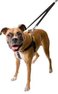 Freedom No Pull Dog Harness Leash Training Package Dog Harness