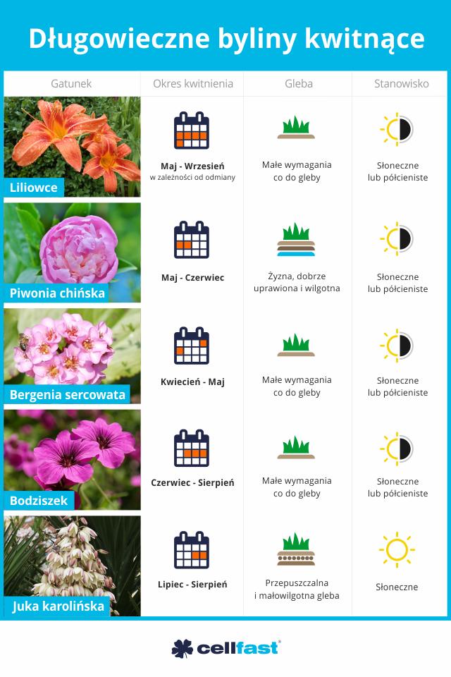 Marzenie Kazdego Ogrodnika Czyli Kwiaty Kwitnace Przez Wiele Lat Ich Atutem Jest To Ze Nie Wymagaja Zbyt Duzo Pracy Balcony Garden Garden Flowers