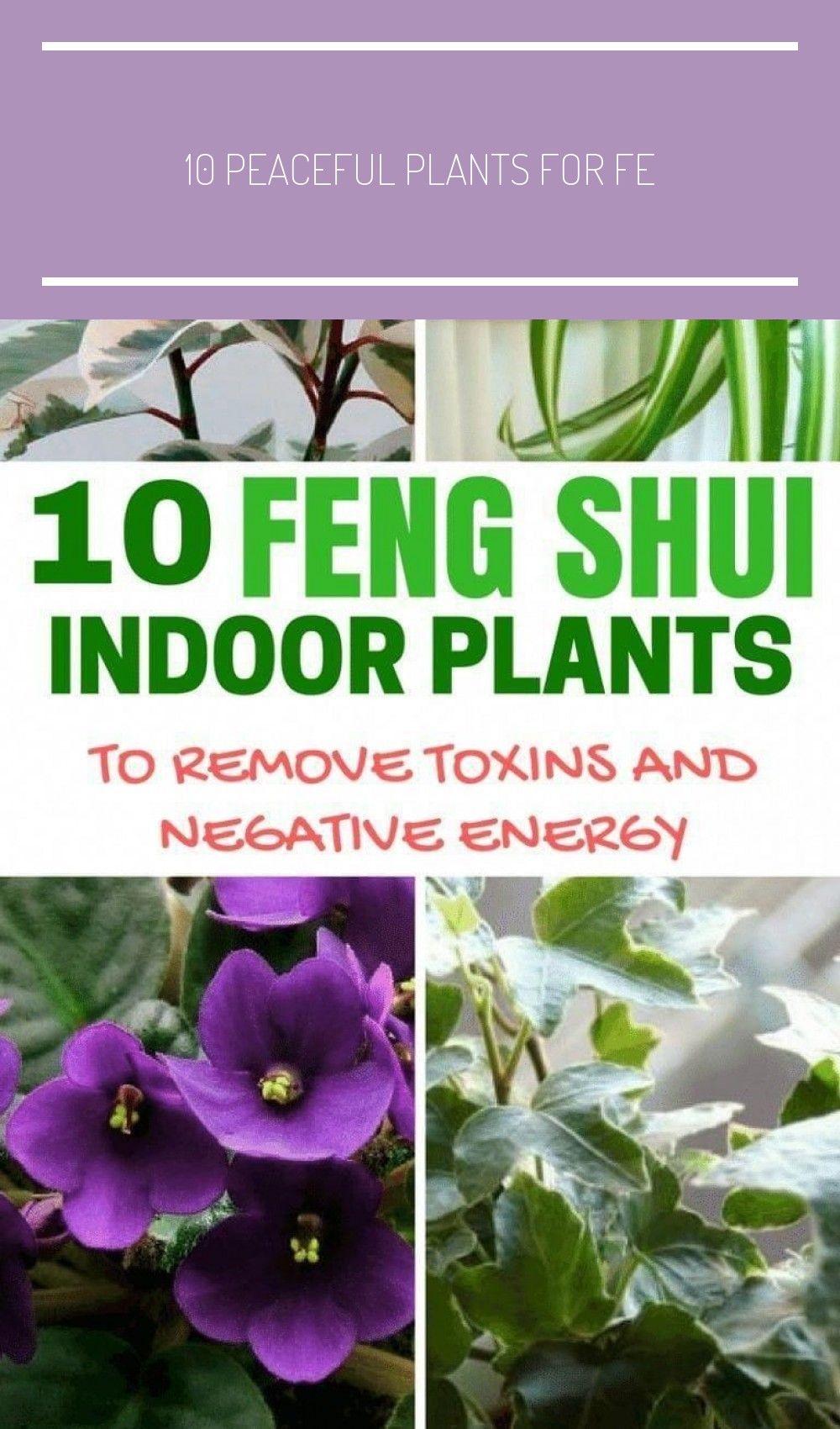 10 Feng Shui Indoor Plants to#feng #indoor #plants #shui # ... on Modern Feng Shui Garden  id=45260