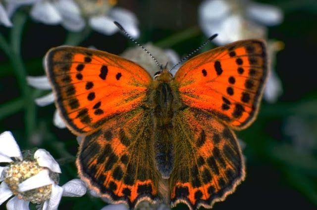 через объектив: Красивые фотографии бабочек в 2020 г ...