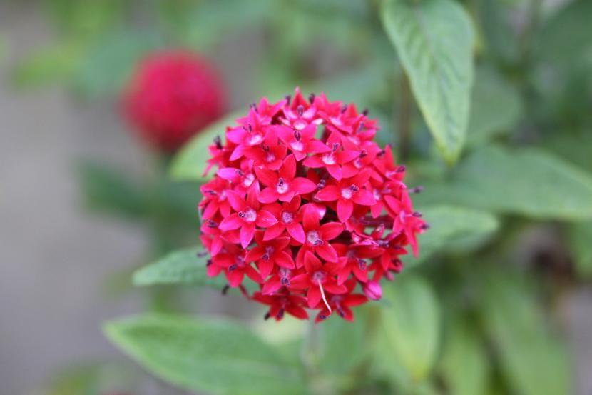 plantas con flor todo el año | plantas, flor y años