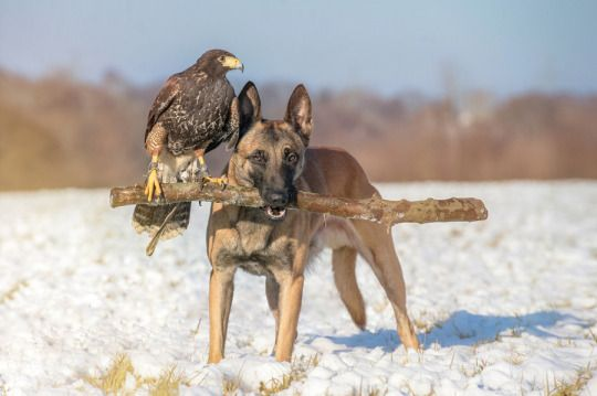 Team by Tanja Brandt