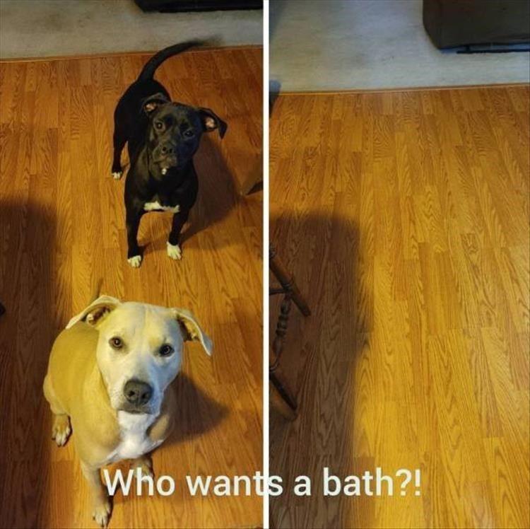 Mailman Chasin Doggo Memes 38 Dog Memes In 2021 Animal Memes Clean Funny Animal Memes Animal Memes