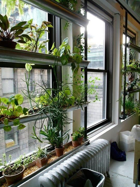 Planttherapy Look The Green Screen At The Ny Horticultural Society Gutter Garden Apartment